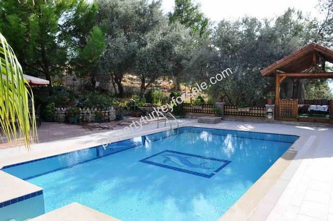 Large Swimming Pool and Olive Trees