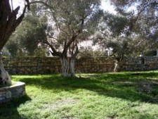 Ortakent Land for sale with OliveTrees for sale