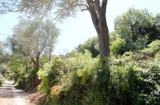 Nature Plot With Sea Views in Yalikavak